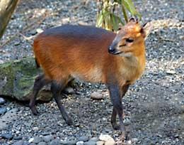 different types of deers photo habitat
