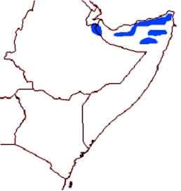 Beira Antelope Distribution