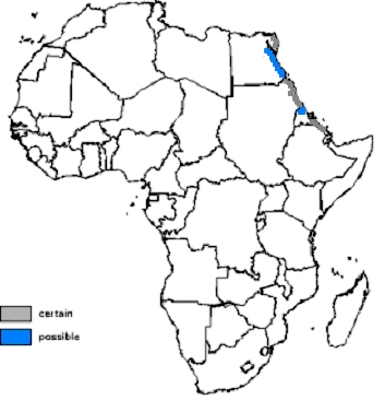 Nubian Ibex Distribution